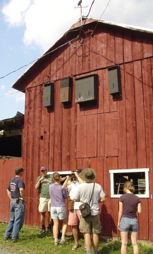 Barn with bat boxes