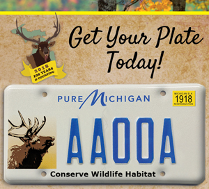 Michigan Elk License plate with the text get your plate today.